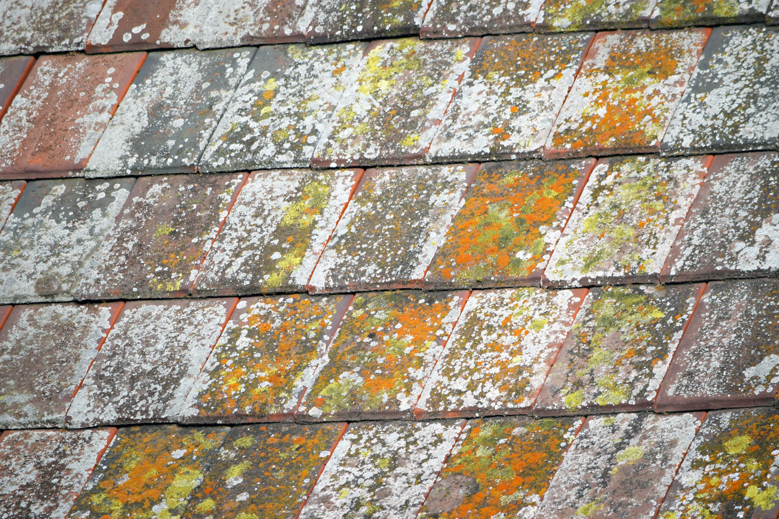 roof moss removal Westmeath
